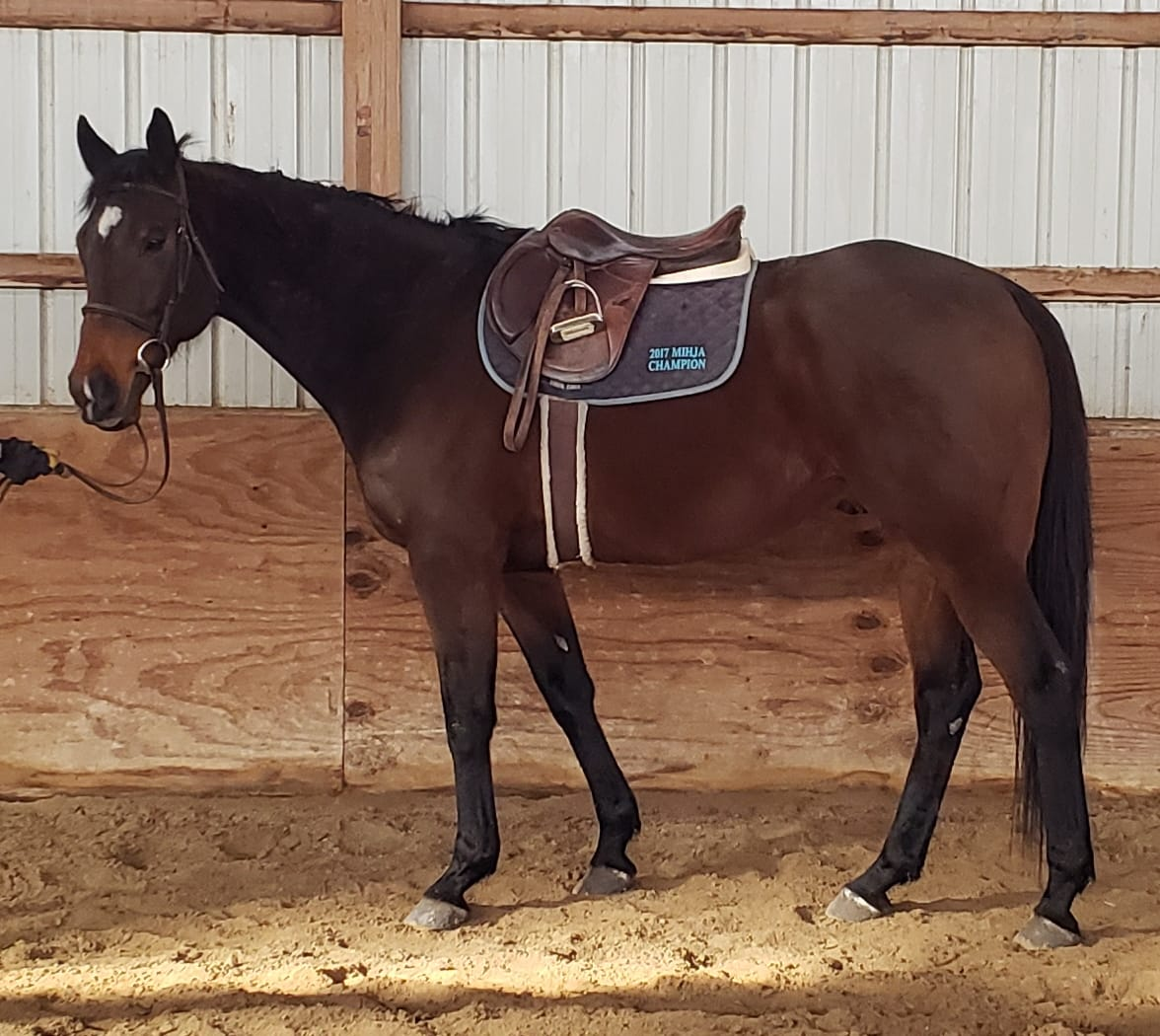 Horses Available for Adoption